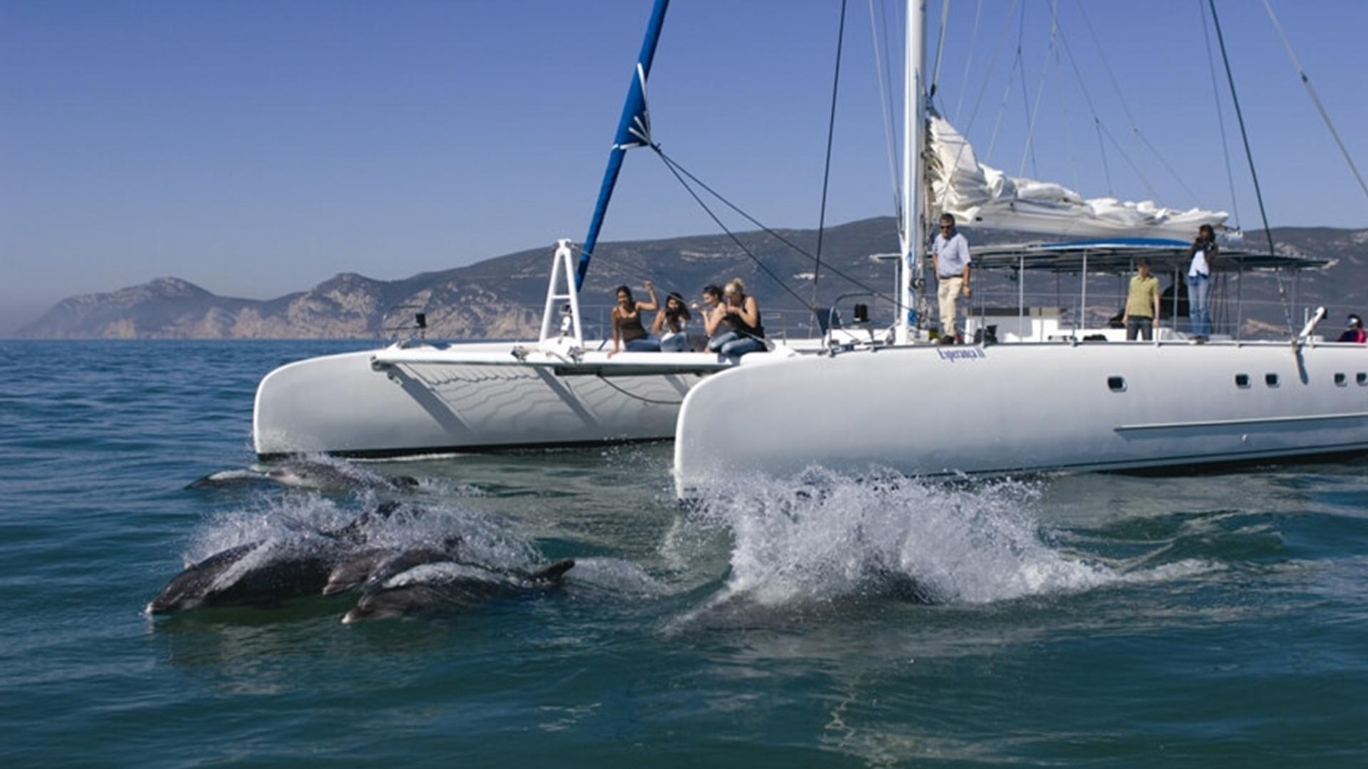 Observação de Golfinhos RM Guest House